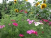 bloemenzee-in-de-moestuin-2-large